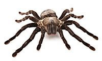 spider pest control services